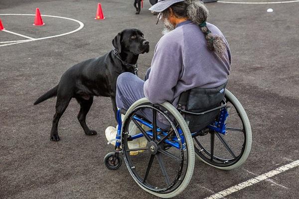 Addestramento di pet-therapy (fonte: tuttozampe.com)