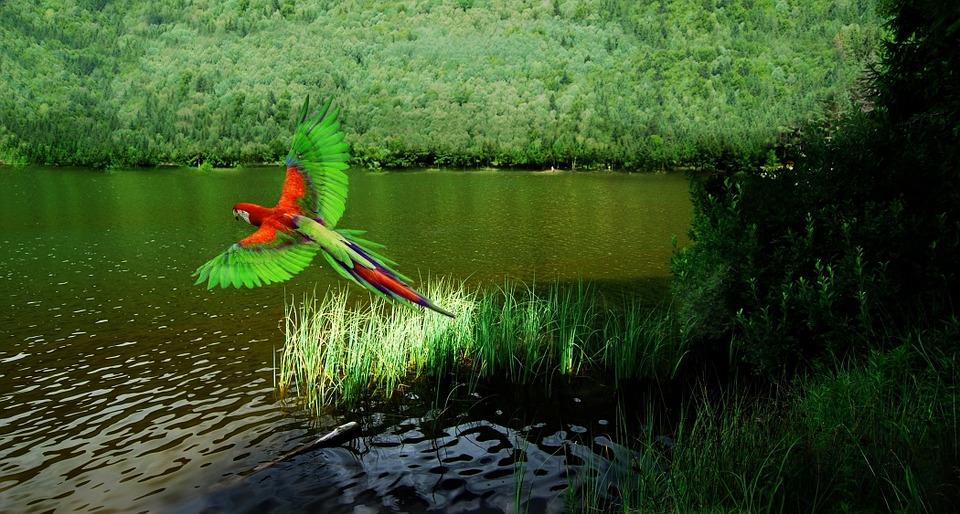 deforestazione-disboscamento-finestraperta-amazzonia-foresta-albero-ecosia-angelo-andrea-vegliante-web-radio-uildm-lazio-norvegia-brasile-tropico-tropicale-albero-natura-pappagallo