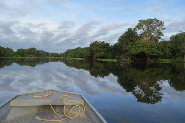 deforestazione-disboscamento-finestraperta-amazzonia-foresta-albero-ecosia-angelo-andrea-vegliante-web-radio-uildm-lazio-norvegia-brasile-tropico-tropicale