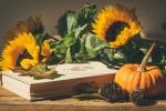 pumpkins-4572707_1920