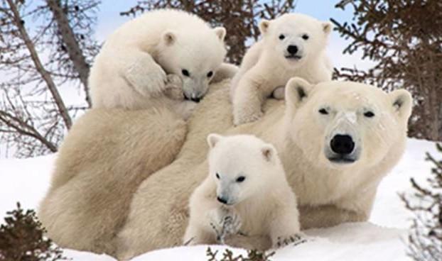 orso-bianco-90961-660x368